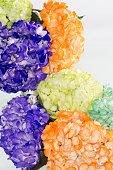 Hydrangea (hortensias); Arrangement of beautiful and colorful hydrangeas.