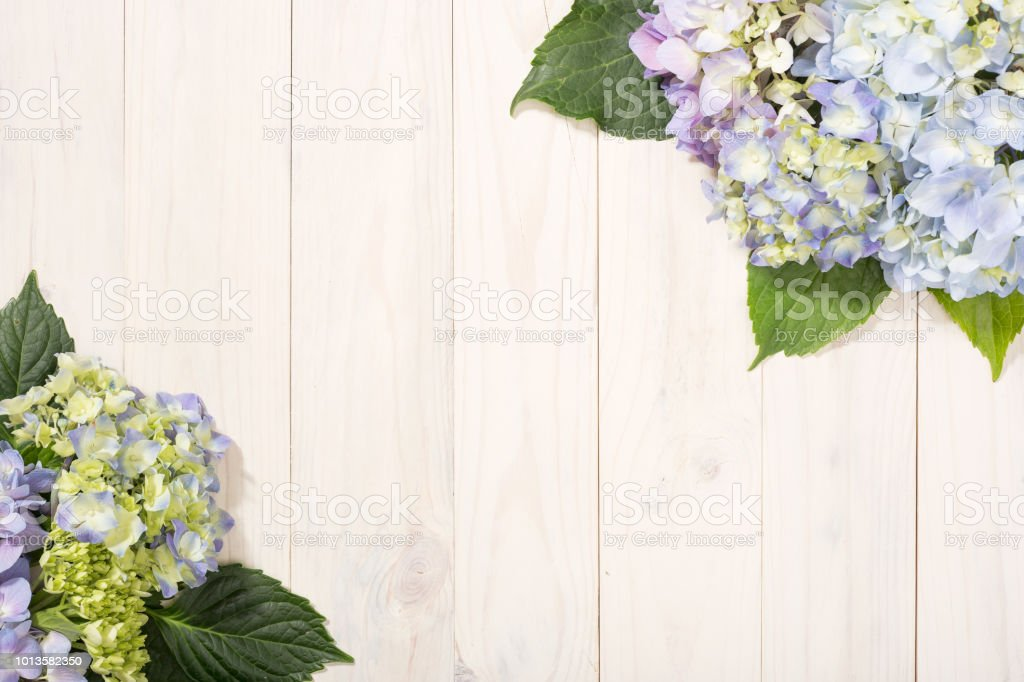 Hydrangea floral border. White wooden background stock photo