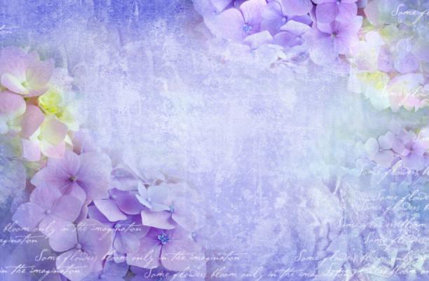 hortensie blumen postkarte. einsetzbar als grusskarte, einladung für hochzeit, geburtstag und andere urlaub passiert. - sprüche zum firmenjubiläum stock-fotos und bilder