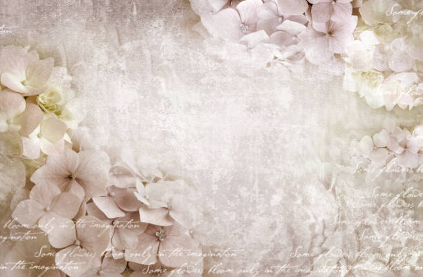 hortensie blumen postkarte. einsetzbar als grusskarte, einladung für hochzeit, geburtstag und andere urlaub passiert. - romantische karten stock-fotos und bilder