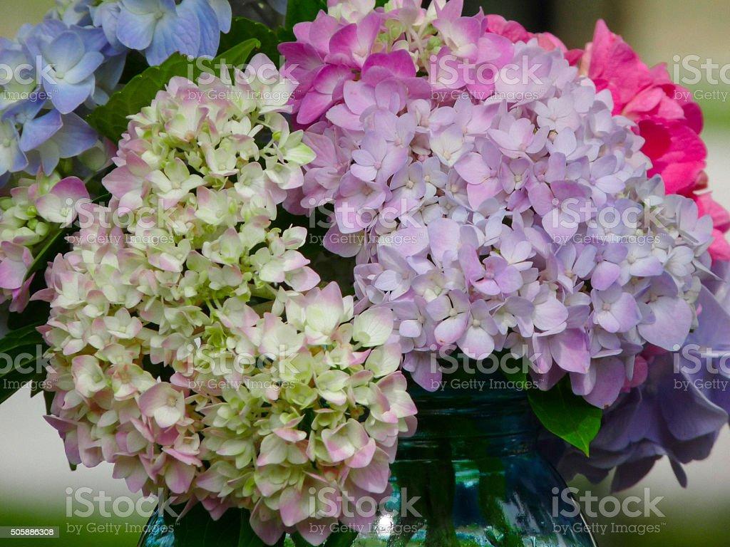 Fiore Di Ortensia Grandi Capi Bouquet Arrangiamento Colori Pastello  Multicolore Foto Stock Royalty Free