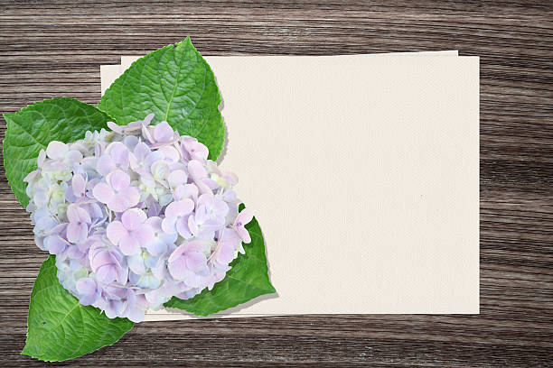 Hydrangea flowers and and paper on wood background stock photo