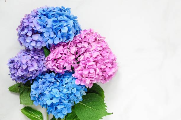 hydrangea blommor bukett över vit marmor bord med kopia utrymme. ovanifrån - flower bouquet blue and white bildbanksfoton och bilder
