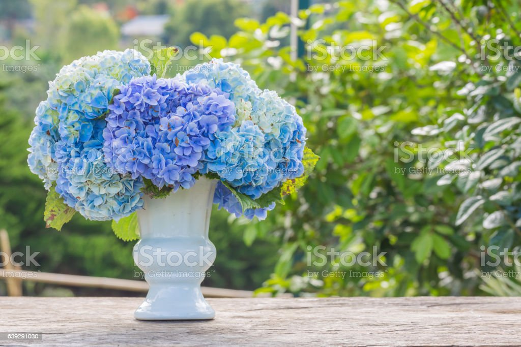 hydrangea flowers in white vase top on old wooden table stock photo