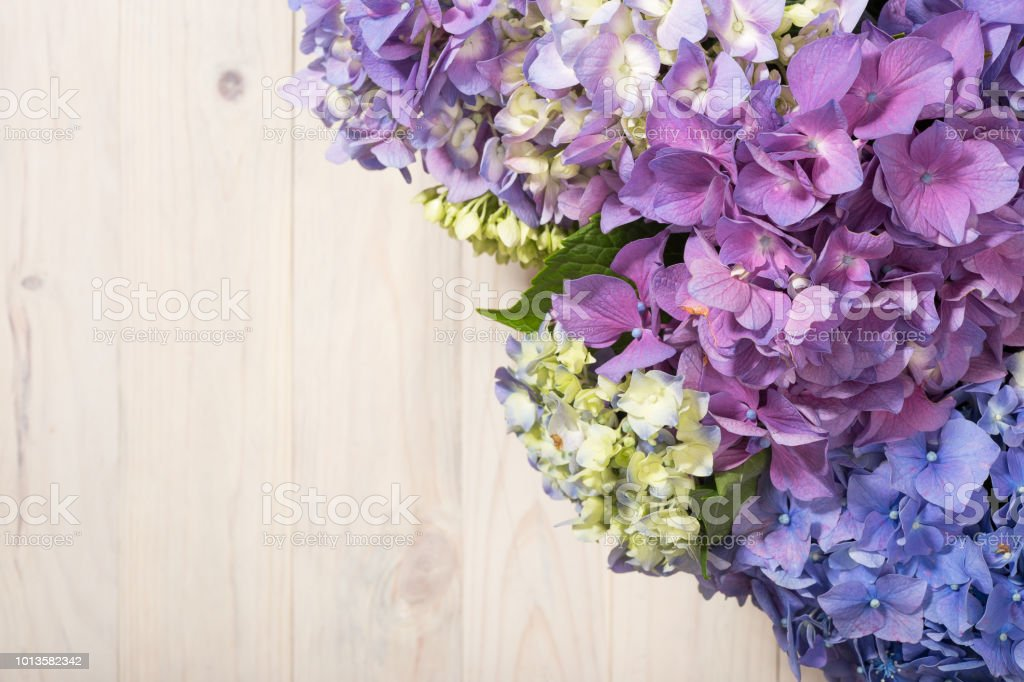 Hydrangea flowers on white wooden background. stock photo