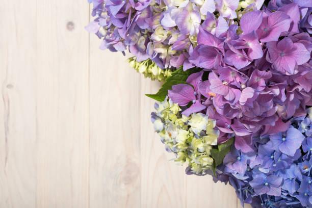Hydrangea flowers on white wooden background. stock photo