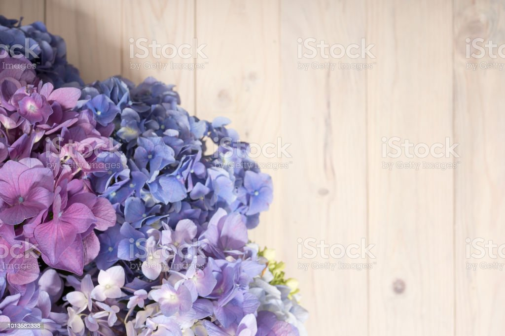 Hydrangea flowers on white wooden background. Top view. Floral border with copy space. stock photo