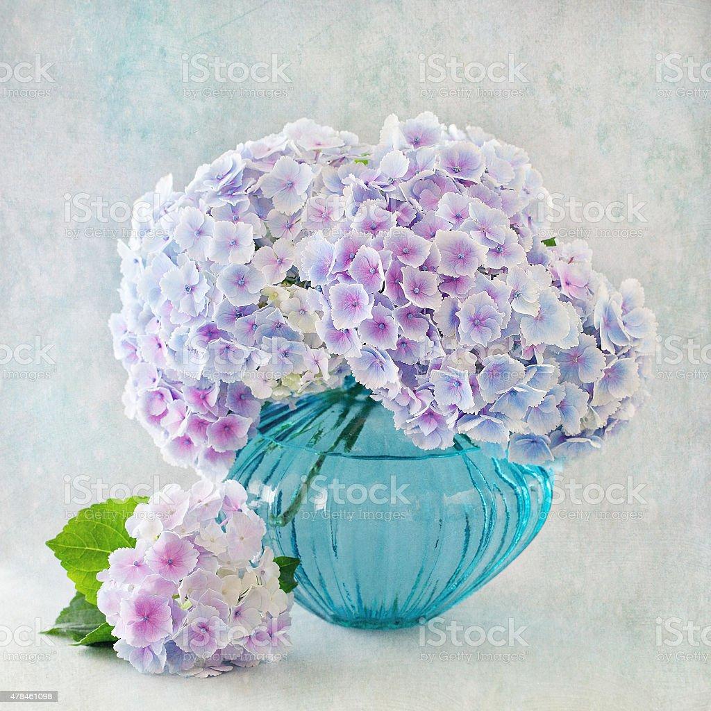 Hortensie Blumen – Foto