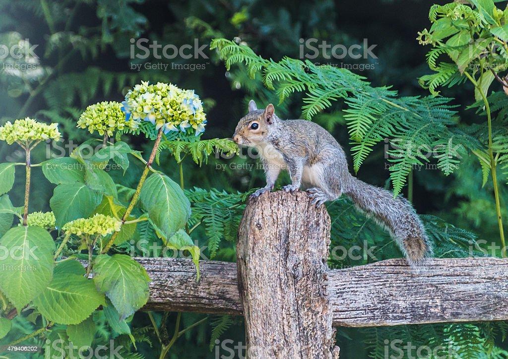 Hydrangea Lover stock photo