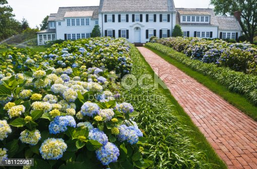 A red brick walkway leads past a large garden of pale blue Hydrangea to a large Colonial Style home on Cape Cod