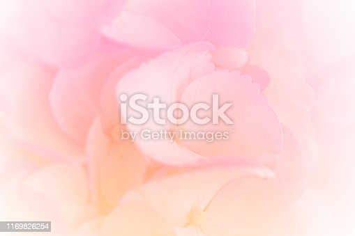 652288118istockphoto Hydrangea with soft pastel color in  blur style for background 1169826254