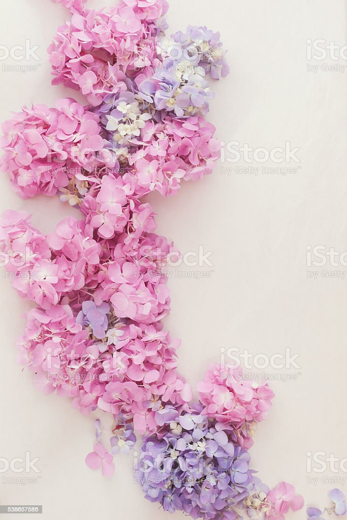 Hydrangeas flower stock photo
