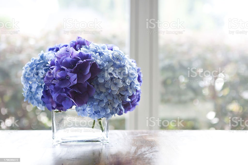 Hydrangeas sit in glass vase on dining table by window stock photo