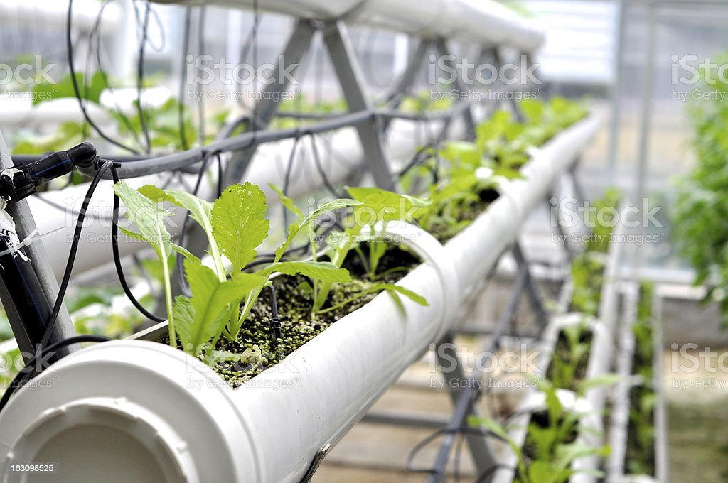 Hydro farming of fruits and vegetables outdoors stock photo