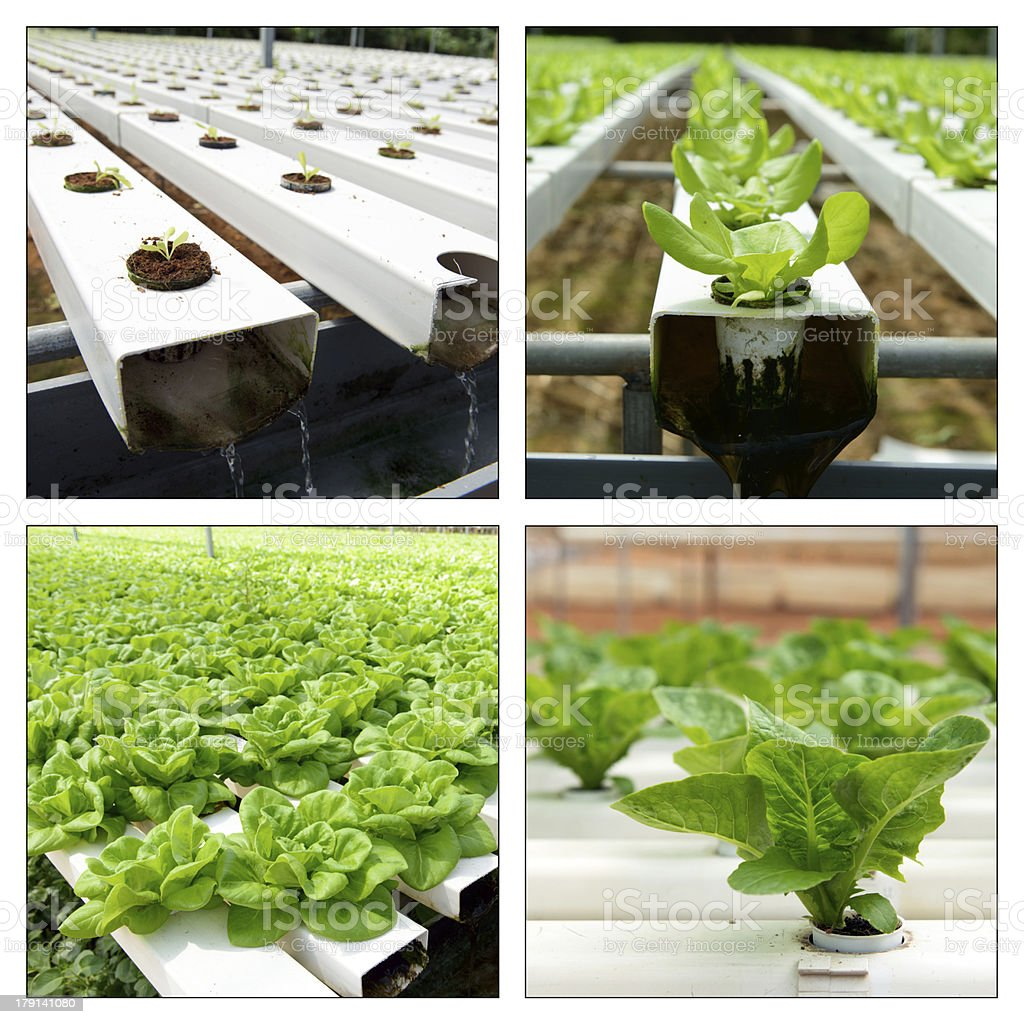 Hydroponic collage royalty-free stock photo