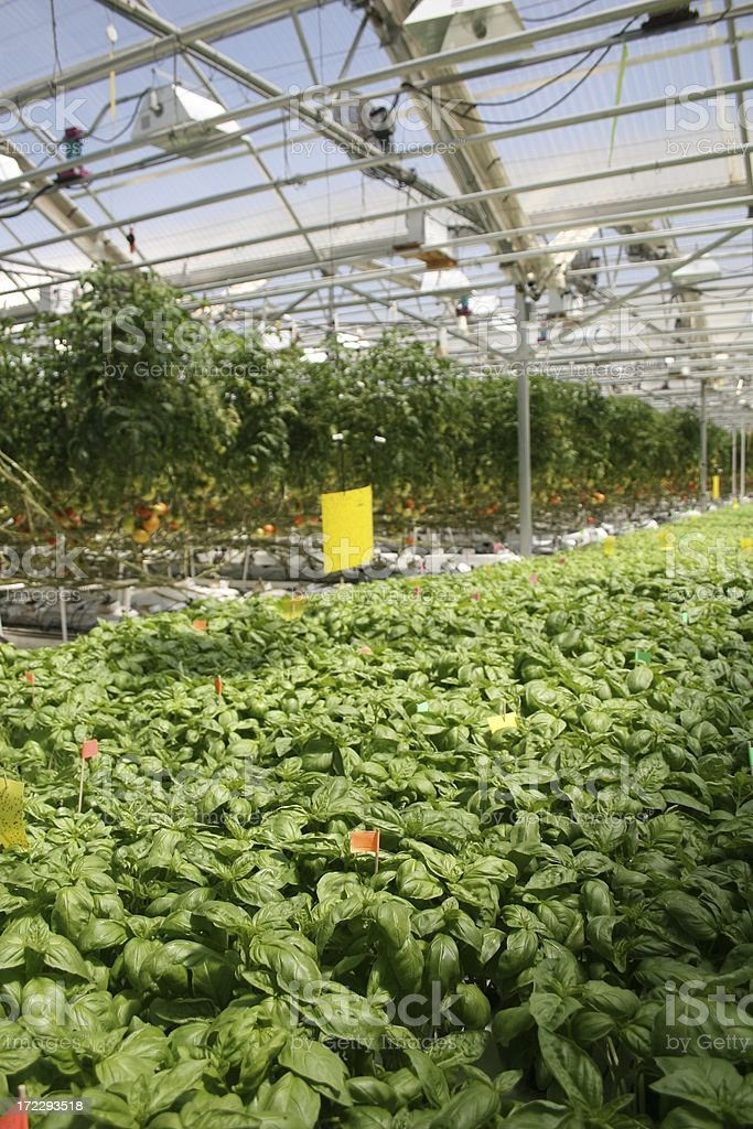 Hydroponic Crops 1 royalty-free stock photo