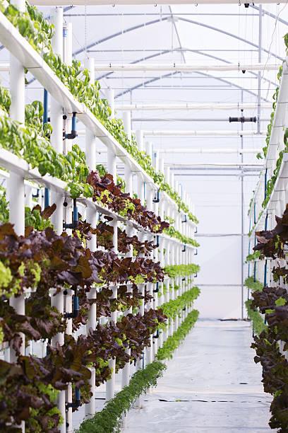 Hydroponic Farm stock photo