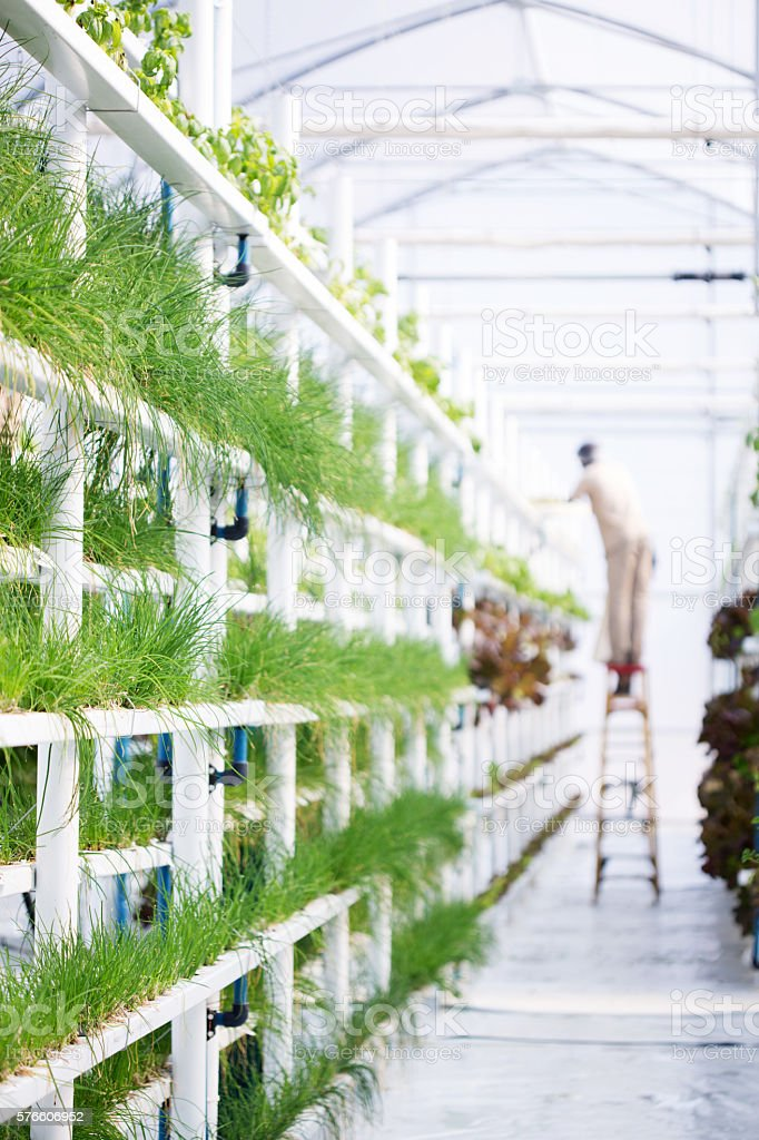 Hydroponic Herb Farm stock photo