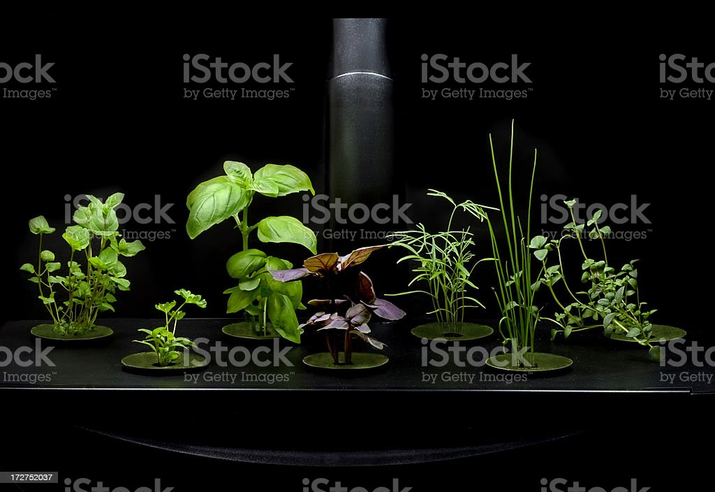 Hydroponic Herb Garden stock photo