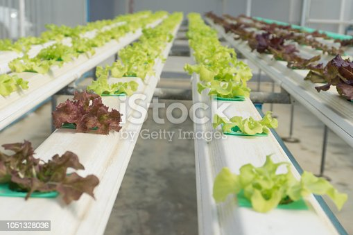 1096949092 istock photo Hydroponic Organic vegetable cultivation farm. 1051328036