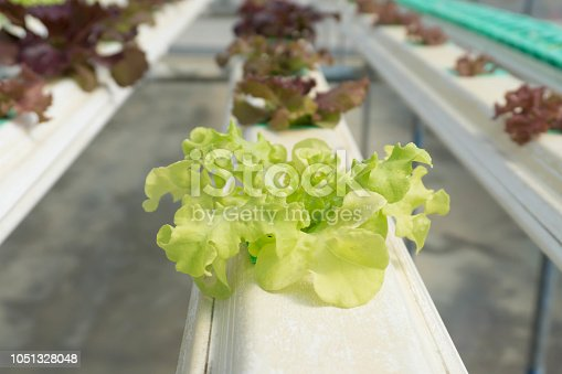 1096949092 istock photo Hydroponic Organic vegetable cultivation farm. 1051328048