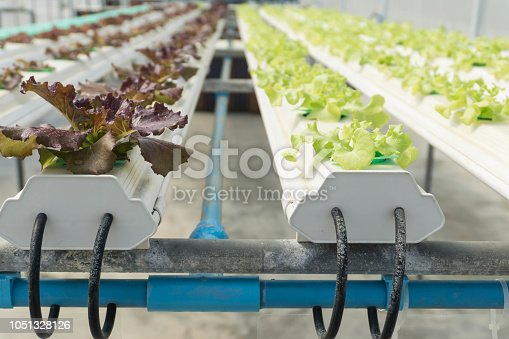 1096949092 istock photo Hydroponic Organic vegetable cultivation farm. 1051328126