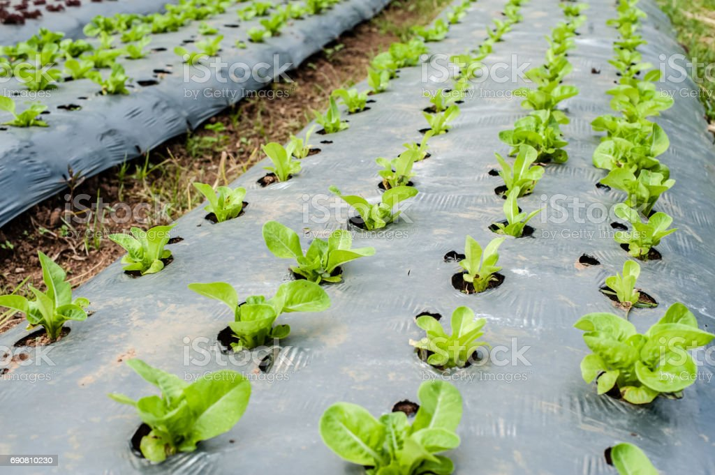 Hydroponic organic vegetable plots cultivation farm stock photo