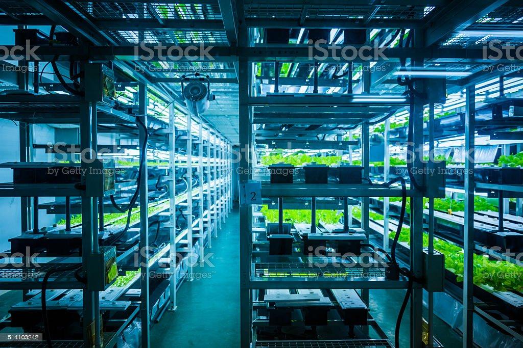 hydroponic system stock photo