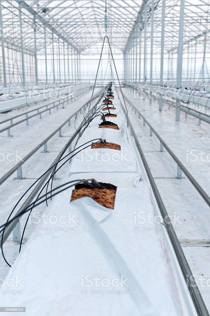 Hydroponic Tomato Production Greenhouse royalty-free stock photo