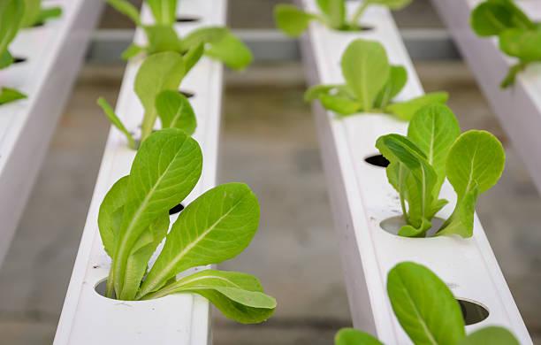 Hydroponic vegetables plantation stock photo