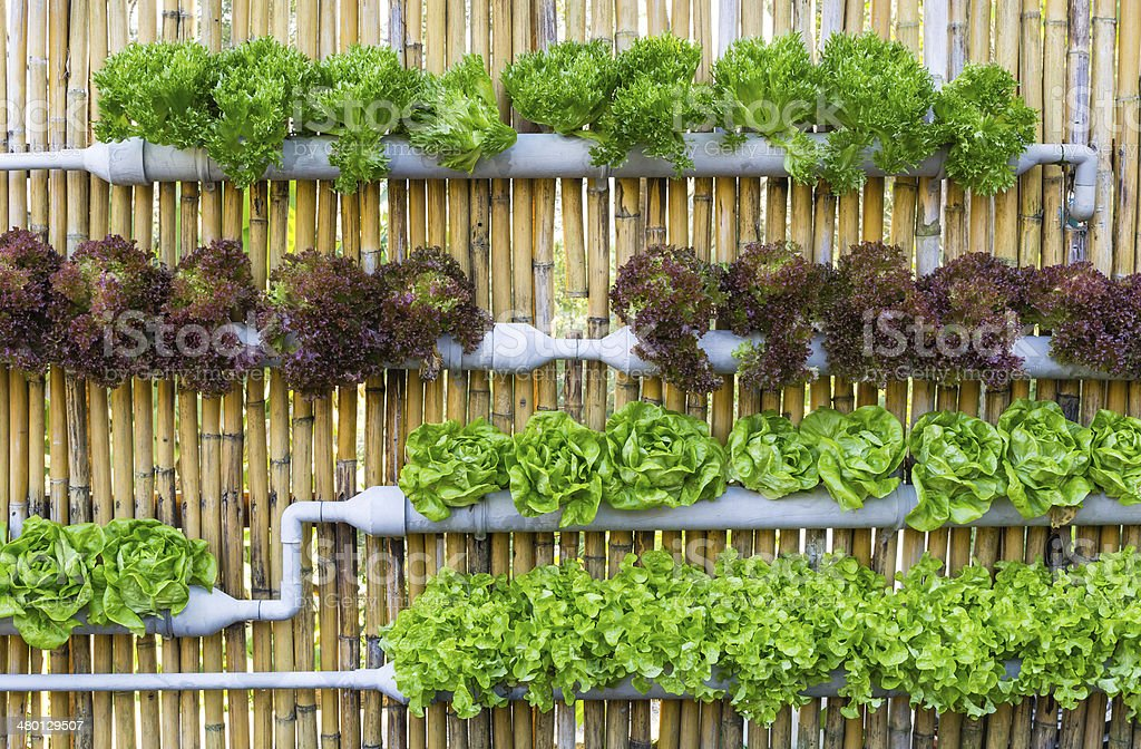 Hydroponic Vertical Gardening stock photo