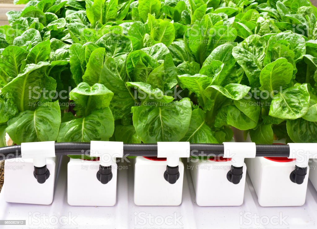 Hydroponics method of growing plants zbiór zdjęć royalty-free