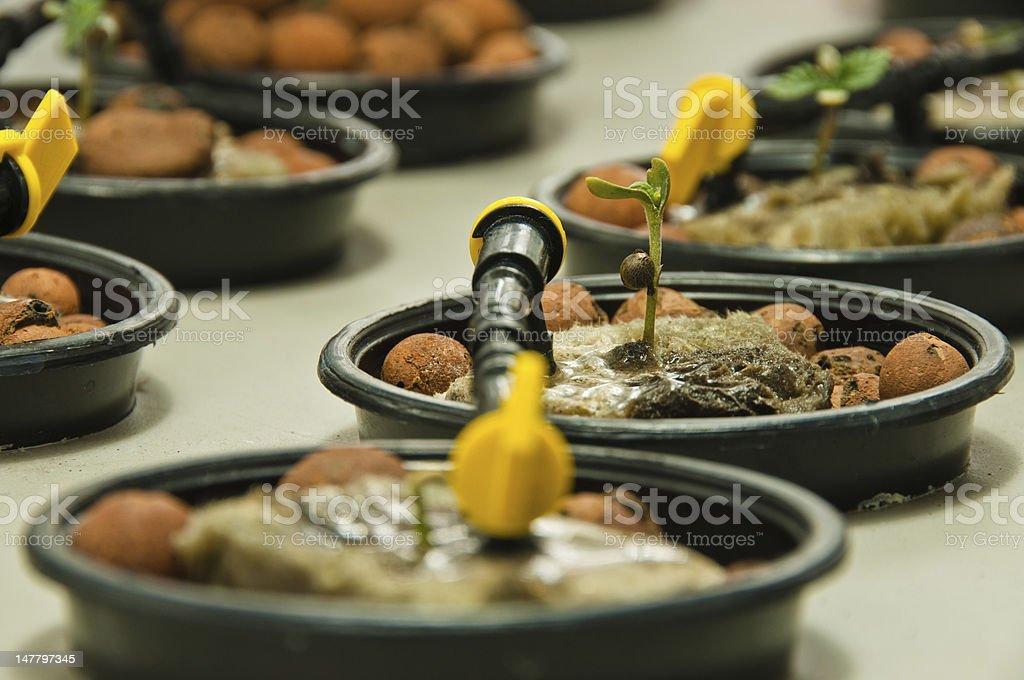 Hydroponics stock photo