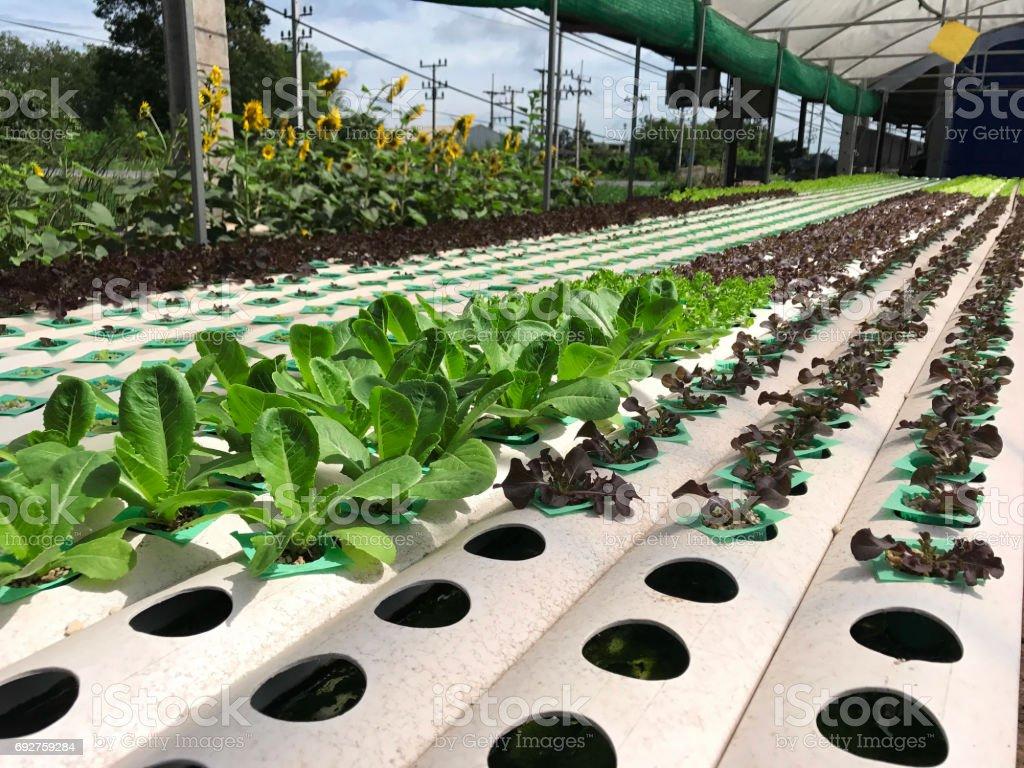 sistema de exploração vegetal de hidroponia - foto de acervo