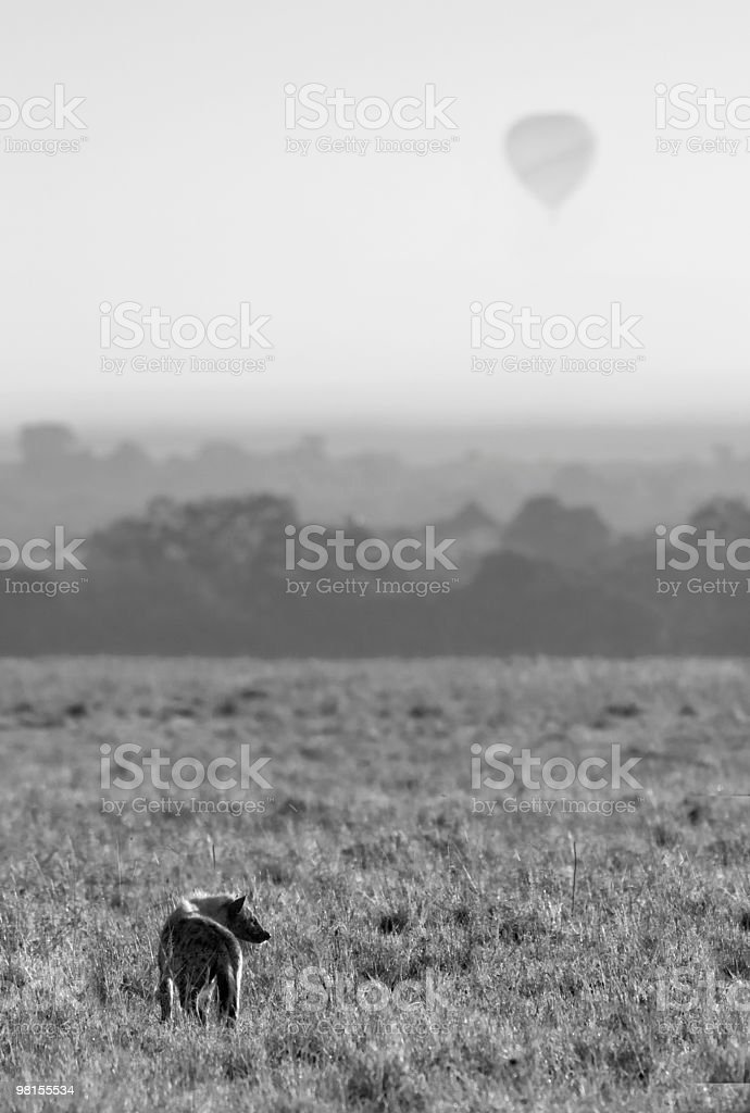 Hyena In Morning royalty-free stock photo