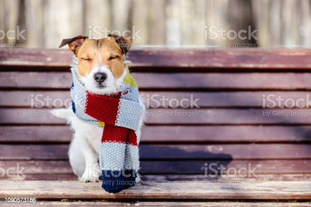 Photo of Hygge concept with happy dog wearing cozy warm scarf