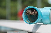 Hymenoptera is building a nest to feed the larvae in a blue PVC pipe in a vegetable garden, and Hymenoptera is also a danger to farmers starting to grow vegetables in the garden.