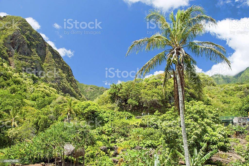Iao Valley State Park on Maui Hawaii stock photo