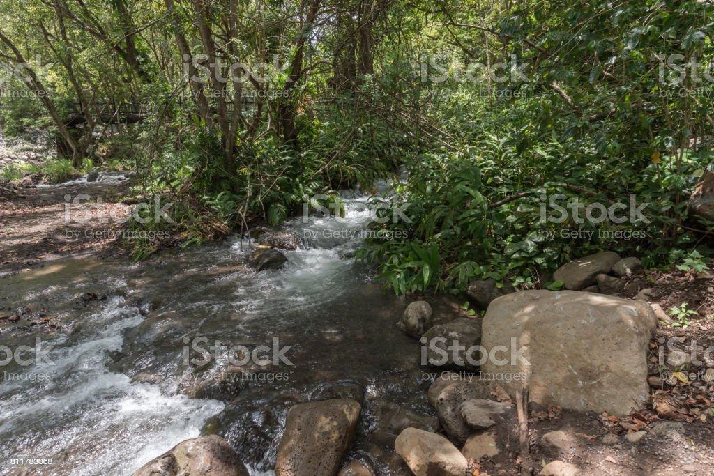 Iao valley streams, Maui stock photo