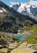 A young male Ibex with mountains and lake in the background.