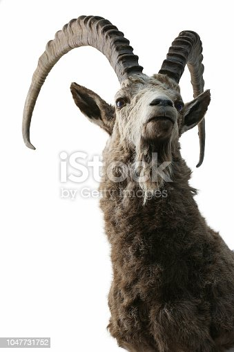 ibex trophy objects isolated animals theme