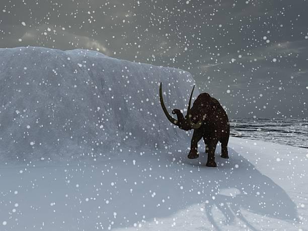 Ice age mammoth stock photo