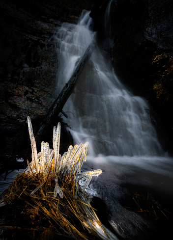 Ice straw, grass straws where´s covered in ice creating an ice sculpture by waterfall, illuminated by a stroke of evening light