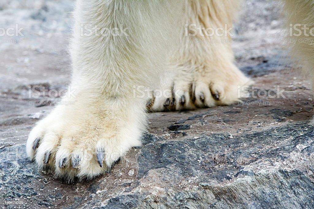 Ice Bear's Paw stock photo