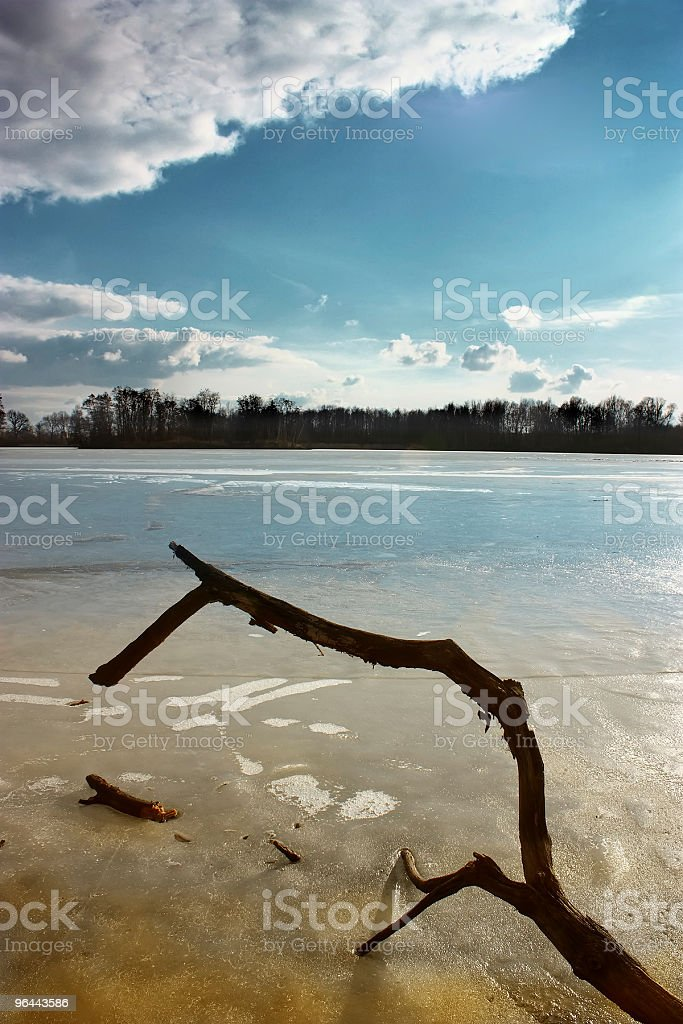 ice branch - Royalty-free Beauty In Nature Stock Photo