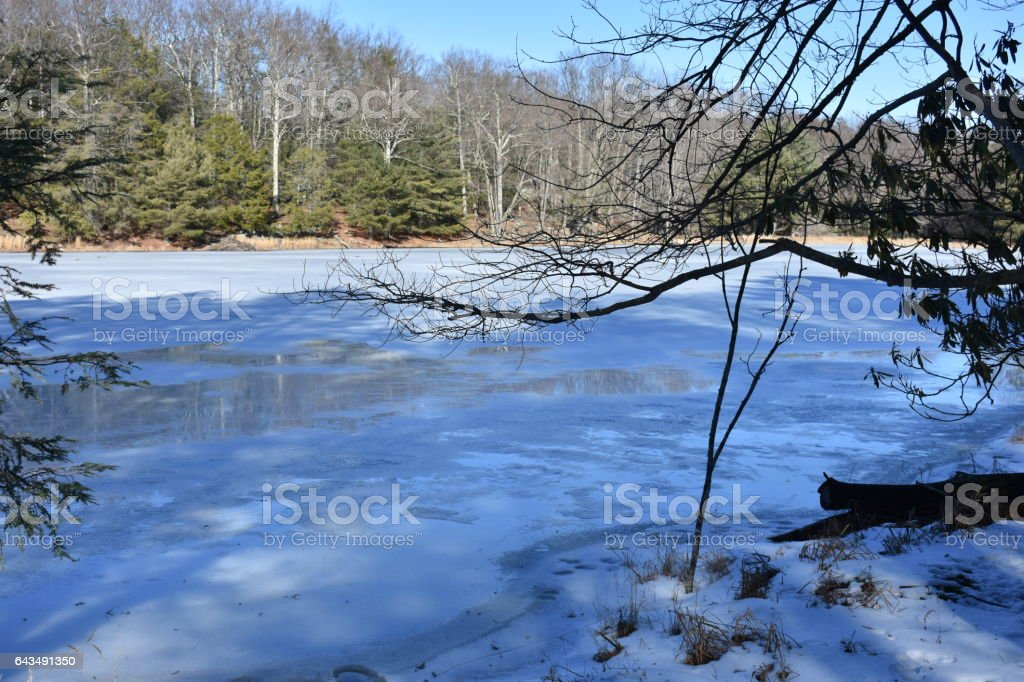 Ice casts a blue sheen on frozen, forest pond stock photo