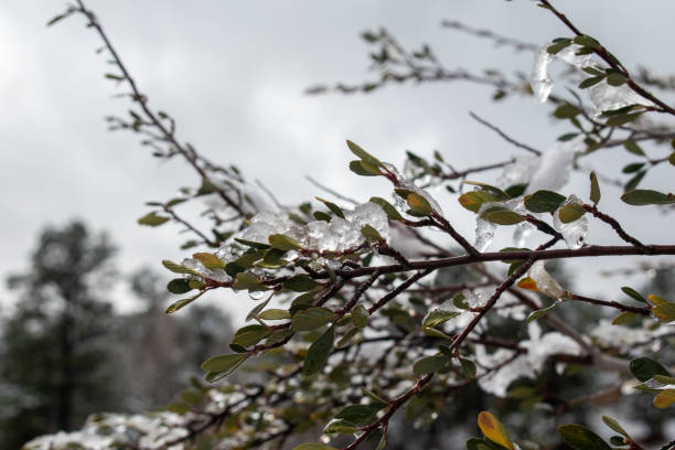 Ice covered branch stock photo