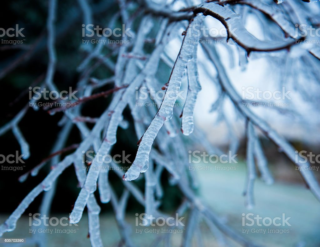 Ice Covered Branch royalty-free stock photo