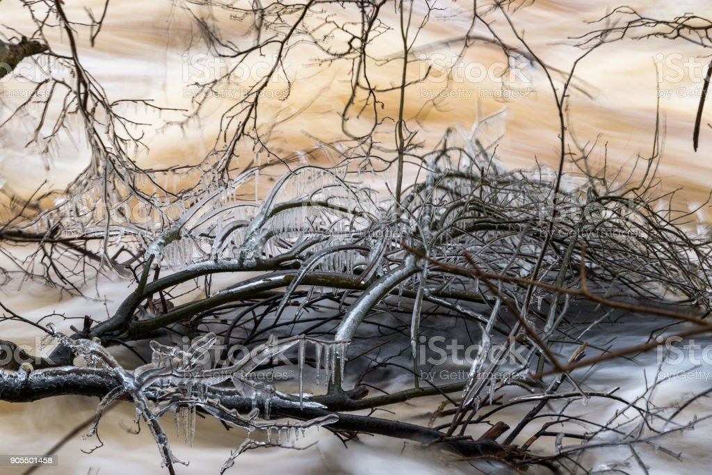 Ice covered branches in river stock photo