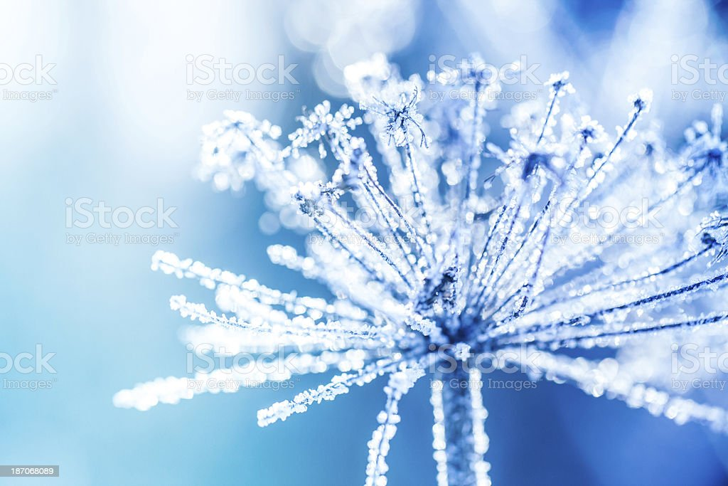 Ice covered plant close-up - Royalty-free Abstract Stock Photo
